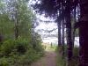 Выход из леса